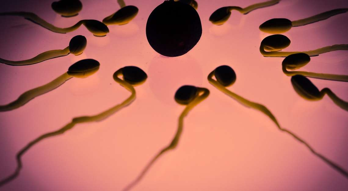 What is Artificial Insemination?
